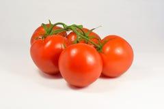 Tomates naturais orgânicos Imagens de Stock