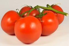 Tomates naturais orgânicos Foto de Stock