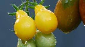 Tomates naturales maduros en la lluvia almacen de metraje de vídeo
