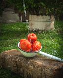 Tomates no filtro do metal com espirro da água fotos de stock royalty free