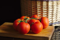 Tomates no ramo fotografia de stock