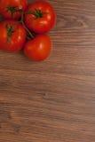Tomates no ramo Imagens de Stock