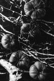 Tomates noires et blanches photographie stock