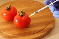 Tomates OGM fotografía de archivo