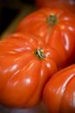 Tomates orgánicos Fotografía de archivo