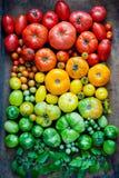Tomates orgánicos frescos Fotografía de archivo libre de regalías