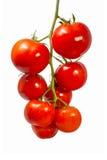 Tomates orgánicos frescos Imagen de archivo