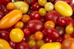 Tomates orgánicos frescos con los waterdrops Imagenes de archivo