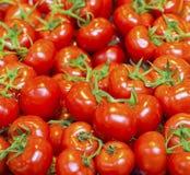 Tomates orgánicos reales en una pila Fotografía de archivo