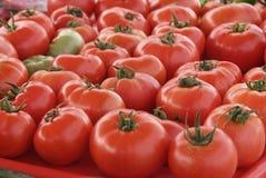 Tomates orgânicos. fotos de stock royalty free