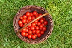 Tomates orgânicos Foto de Stock Royalty Free