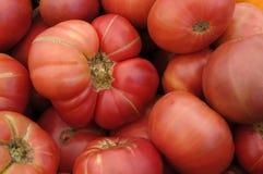 Tomates orgânicos da herança Imagem de Stock