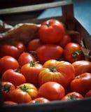 Tomates orgânicos suculentos frescos fotos de stock