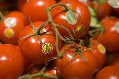 Tomates organiques Photos stock