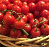 Tomates organiques Photographie stock