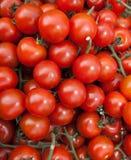 Tomates organiques de vigne Photo libre de droits