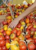Tomates para la venta en un mercado de los granjeros Fotografía de archivo libre de regalías