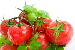 Tomates, persil et basilic rouges avec des baisses de l'eau. Images libres de droits