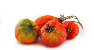 Tomates podres Foto de Stock Royalty Free