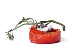 Tomates putréfiées photographie stock libre de droits