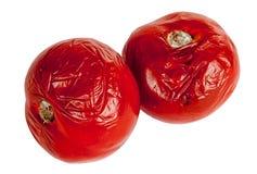 Tomates putrefactos Imagen de archivo libre de regalías