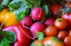 Tomates, rábanos, pimientas y perejil frescos Imágenes de archivo libres de regalías