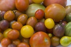 Tomates fraîches de jardin Photo libre de droits