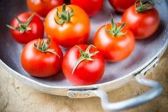 Tomates rústicos em um frigideira do metal Imagem de Stock Royalty Free