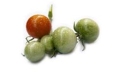 Tomates recentemente colhidos com orvalho Imagem de Stock
