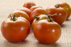 Tomates recién cosechados de la agricultura biológica fotografía de archivo libre de regalías