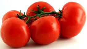 Tomates rojos Fotografía de archivo libre de regalías