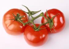 Tomates rojos Imagenes de archivo