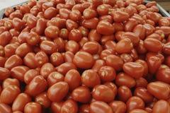 Tomates rojos Fotografía de archivo