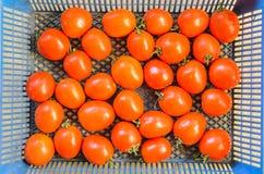 Tomates rojos Imagen de archivo