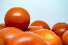 Tomates rojos brillantes con el fondo blanco nada  Imágenes de archivo libres de regalías