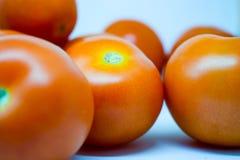 Tomates rojos brillantes con el fondo blanco nada  Fotos de archivo