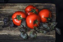 Tomates rojos con albahaca púrpura Foto de archivo libre de regalías