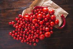 Tomates rojos con descensos del agua Tomates de diversas variedades fondo de los omatoes Concepto sano de la comida de los tomate Imagenes de archivo