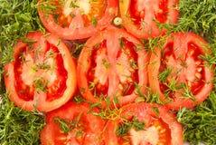 Tomates rojos con eneldo verde debajo Fotografía de archivo libre de regalías