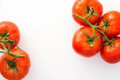 Tomates rojos con las gotitas de agua Imágenes de archivo libres de regalías