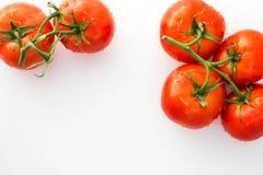 Tomates rojos con las gotitas de agua Foto de archivo libre de regalías