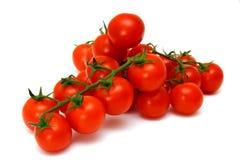 Tomates rojos frescos de la vid Fotografía de archivo