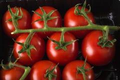 Tomates rojos frescos de la visión aérea en bandeja negra del plástico del supermaket Imagen de archivo libre de regalías