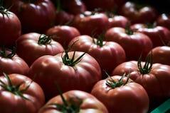 Tomates rojos frescos fondo, primer farming Agricultura fotografía de archivo