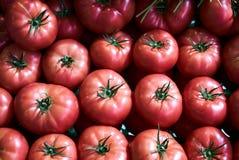 Tomates rojos frescos fondo, primer farming Agricultura imágenes de archivo libres de regalías