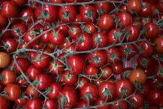 Tomates rojos frescos fondo, primer farming Agricultura imagenes de archivo