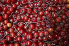 Tomates rojos frescos fondo, primer farming Agricultura fotografía de archivo libre de regalías
