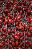 Tomates rojos frescos fondo, primer farming Agricultura foto de archivo