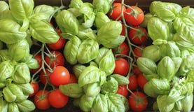 Tomates rojos frescos y albahaca verde Fotografía de archivo