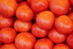 Tomates rojos grandes Imágenes de archivo libres de regalías
